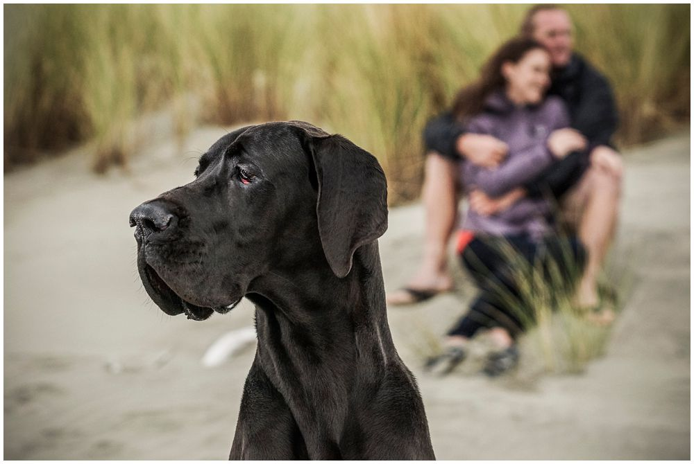 Wedding photography with couple including family pet dog in engagement shoot
