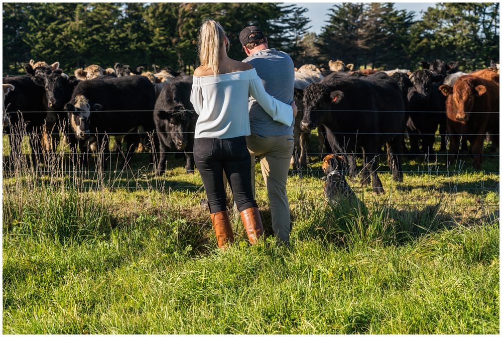 engaged couple looking at their herd of cattle