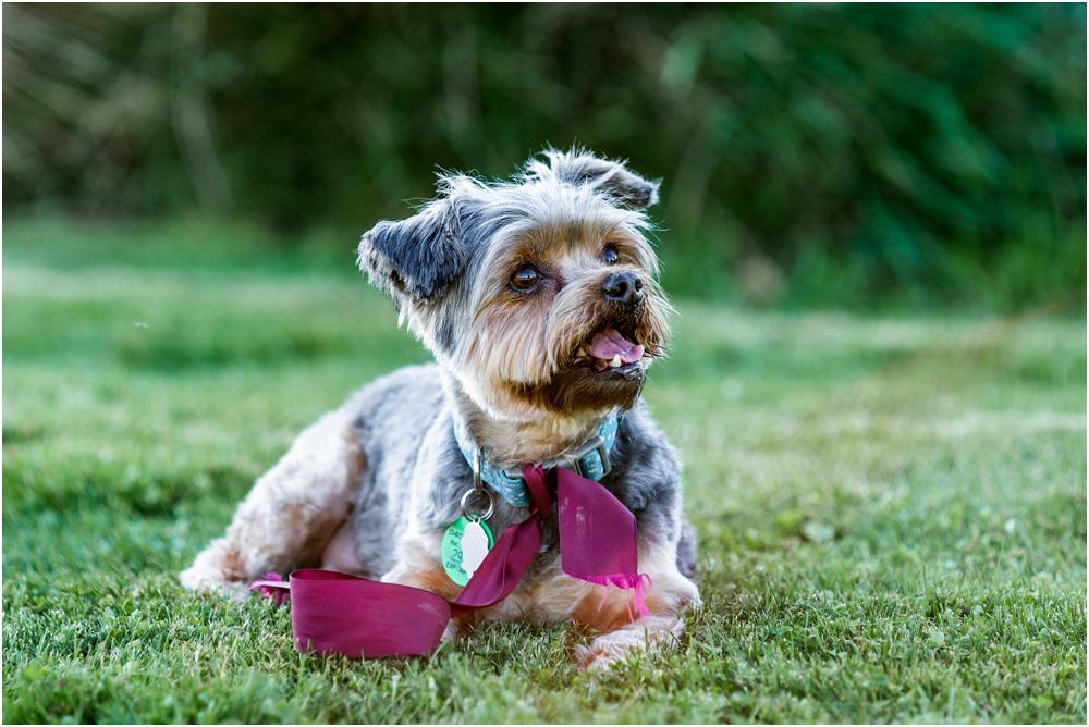 bride-groom's pet dog